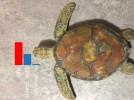Черепаха - это винтовка: Студенты MIT обманули ИИ Google
