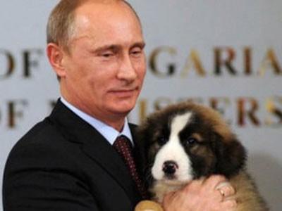 Блоггеры рекомендовали Путину представить его щеночка Азаровым