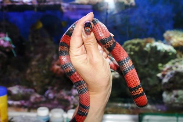 По Одесскому зоопарку разгуливала змея