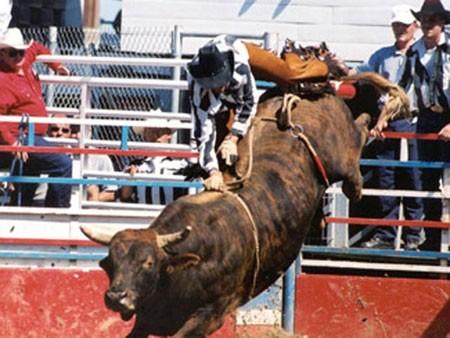 В Соединенных Штатах бык испачкал насмерть участника состязание