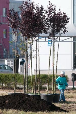 В столице состоялась Эко-акция «Купил автомашину? Посади дерево!»