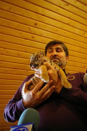 В Бердянском зоопарке вышла уссурийская тигрица