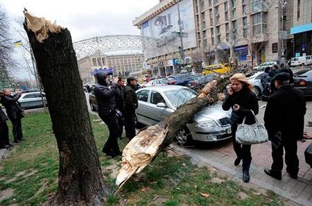 В Киеве смерч скинул дерево на автомашину