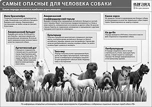 В Московской области собака закусала малыша